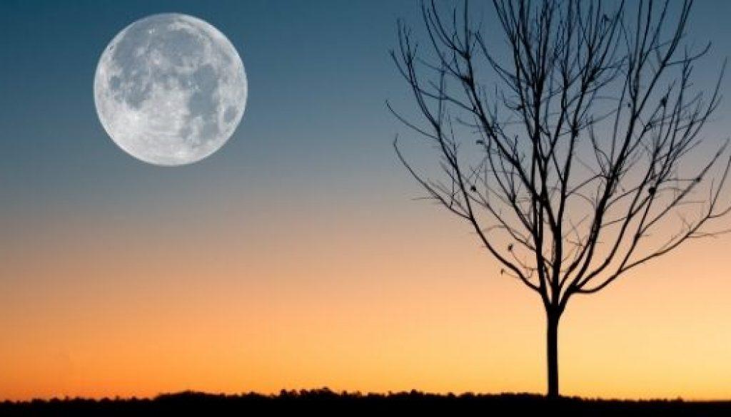 Nuestra fiesta luna llena y el medio ambiente