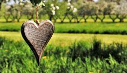 corazon de madera en la naturaleza
